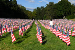 Field of American Flags Royalty Free Stock Images