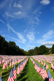 Field of American Flags Royalty Free Stock Photos