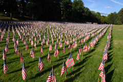 Field of American Flags  during US Independence Day Royalty Free Stock Image