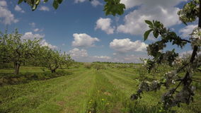 Field of apple-trees industrial garden, 4K stock footage
