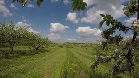 Field of apple-trees industrial garden, 4K stock footage