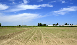 Field, arable land. Royalty Free Stock Photography