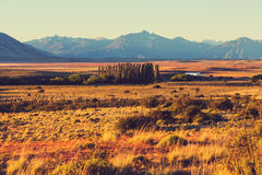 Field in Argentina Stock Photography