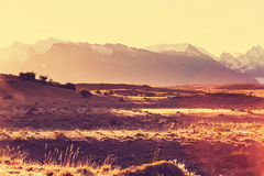 Field in Argentina Royalty Free Stock Photography