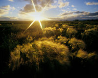 Field At Sunset Royalty Free Stock Images