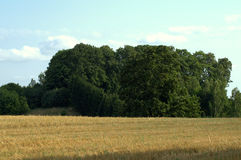 Field in August Stock Photo