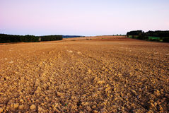 Field in autumn. View of broke field in month September after sunset Royalty Free Stock Image