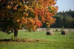 Field in the autumn Royalty Free Stock Image