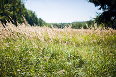Field in autumn day Royalty Free Stock Images