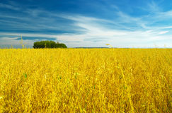 Autumn landscape. Yellow field and blue sky Royalty Free Stock Images