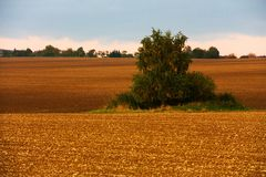 Field in autumn Royalty Free Stock Photo