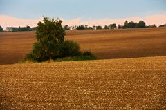 Field in autumn Royalty Free Stock Photos