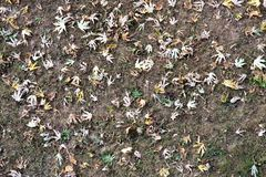 A field in autumn, with some leaves. A field in autumn with the sheets sand banks Stock Photography