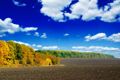 Field and autumn wood Royalty Free Stock Photography