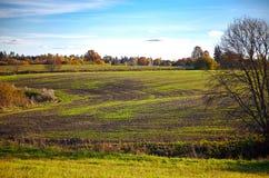 Field in autumn Stock Image