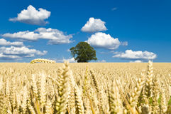 Field on a backgound of blue sky and clouds Royalty Free Stock Photography