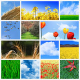 Field background stock image
