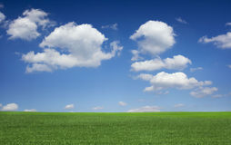 Field on a background of the blue sky Royalty Free Stock Photography