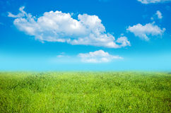 Field on a background of the blue sky Stock Photography