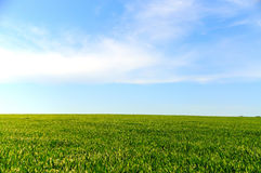 Field on a background of the blue sky. Green grass on background of blue sky stock image