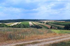 Field background. Large agriculture field with arable land and grass path Stock Photo