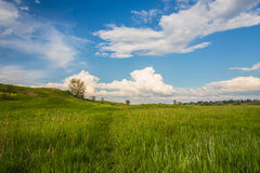Field on a background of the sky Royalty Free Stock Image