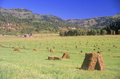 Field of baled hay Royalty Free Stock Photo