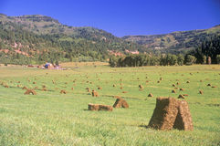 Field of baled hay, Telluride, CO Royalty Free Stock Image