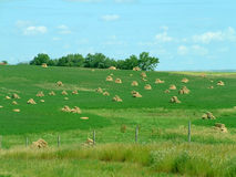 Field of Bales. Field of small square bales on the prairie royalty free stock photo