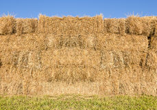 Field with bales of hay Stock Images