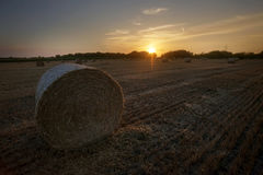 Field of bales of hay Stock Image