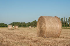 Field with bales of hay after the harvest Royalty Free Stock Image