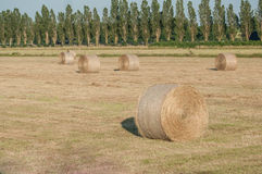 Field with bales of hay after the harvest Royalty Free Stock Images