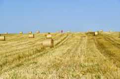 Field with bales of hay Royalty Free Stock Images