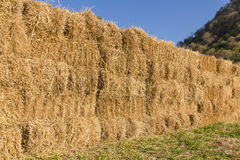 Field with bales of hay Stock Photo