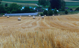 Field with bales. Round hay bales in field at evening. State of Vaud Switzerland Stock Photos