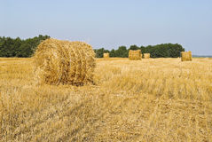 Field with bales of straw. Harvested straw bales in the field Royalty Free Stock Photos