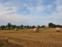 Field with Bales of straw. Bales of straw on the field with palms in behind Royalty Free Stock Photography