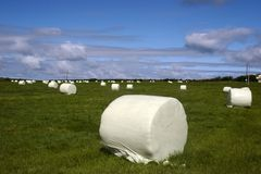Field of bales v Stock Images