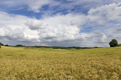 Field of Barley in the storm summer country Landscape Stock Photo