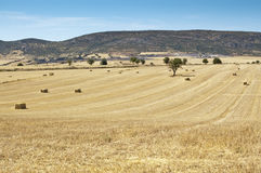 Field of barley stubble. In an arable landscape in Ciudad Real province, Spain Stock Image