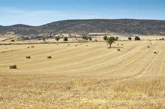 Field of barley stubble Stock Image