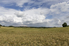 The Field of the Barley in the summer storm Day Royalty Free Stock Photos