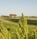A field with a barn. Royalty Free Stock Photos