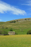 Field barn in yellow field, Swaledale, Yorkshire Stock Photo