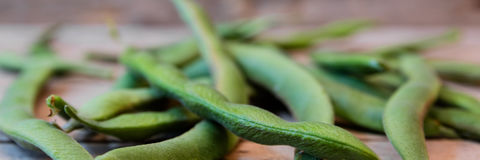Field beans panorama Stock Photos