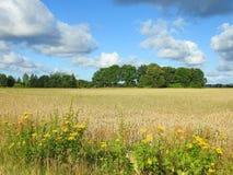 Lithuanian summer landscape Stock Photos