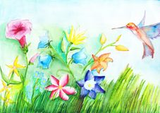 Field beautiful flowers and hummingbirds on watercolor drawing. Copy space.  Stock Photos