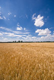 Field and a beautiful sky. On this picture you can see a field and a beautiful sky stock photos