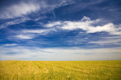 Field in a beautiful sunny day Royalty Free Stock Images